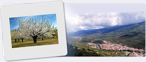 Valle del jerte for Oficina de turismo valle del jerte